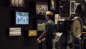 Patron interacting with screen exhibit